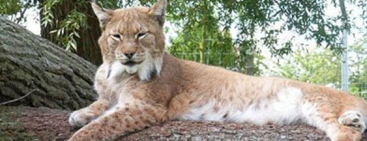 © Tierpark Wismar (Author: © Tierpark Wismar)